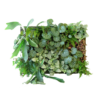 Semaine tastemaker Rohan Silva enjoys standing plant living wall by Sagegreenlife