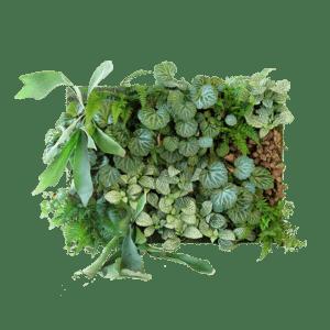 Semaine tastemaker Rohan Silva enjoys standing plant living wall by Sagegreenlife